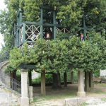 """The lovely Tanzlinde (which means literally """"dance Linden tree""""). Joy and I are standing """"in"""" it. It is not easy to tell from this photo, but a large platform is built into the tree, surrounding the huge trunk, and in the summer, there are dances held there. Only in Germany!"""